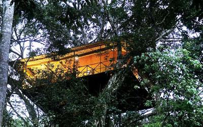 tree house resort. Vythiri Resort - Tree House D
