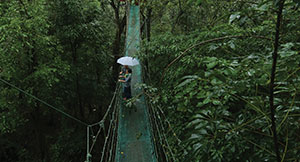 Hanging Bridge at vythiri Resort