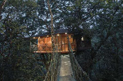 Vythiri resorts -  tree house
